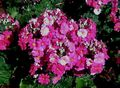 Otherpinkflowers