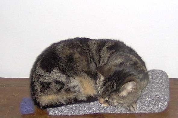 NoraSleeping