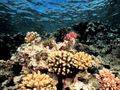 Coral-reef_507_600x450