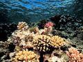 Coral-reef_507_600x450