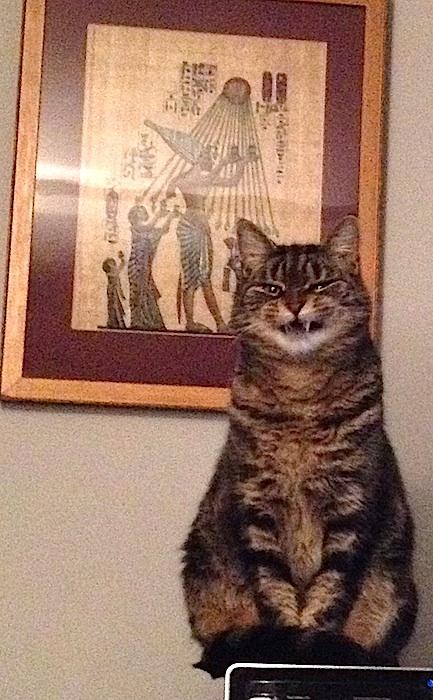 Kitty Kufu Snarls at the Masses