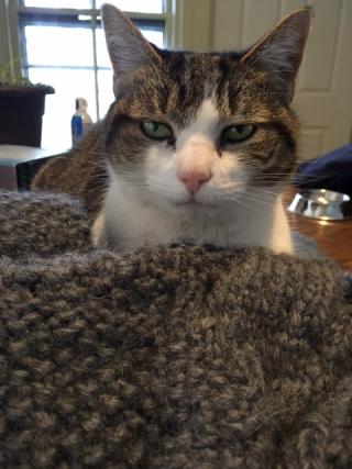 Pogo's Sweater