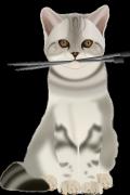 Cat-1297689_640