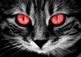 Cat-2807042_640
