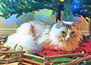 Cat-3275554_640